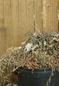 Junk - Brush Pile